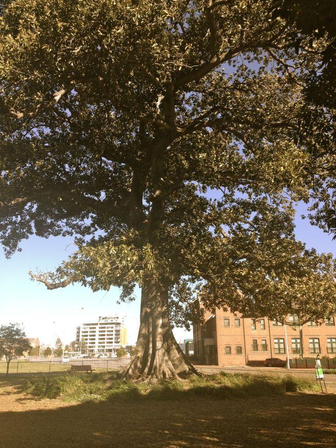 treeofknowledge